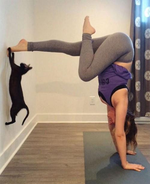 Thiếu cảm hứng yoga hãy thử yoga với động vật